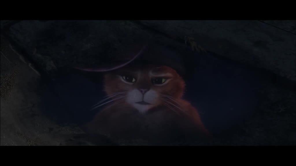 牛仔猫的烦恼与故事,我还是第一次听到,太伤心了