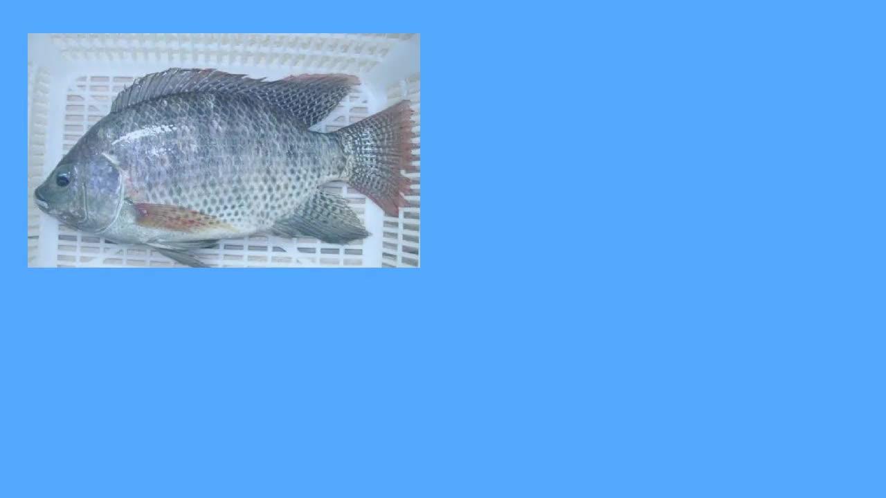 秋季钓鱼技巧台钓更换教学技巧路亚钓鱼视频note3外教程钓鱼屏图片