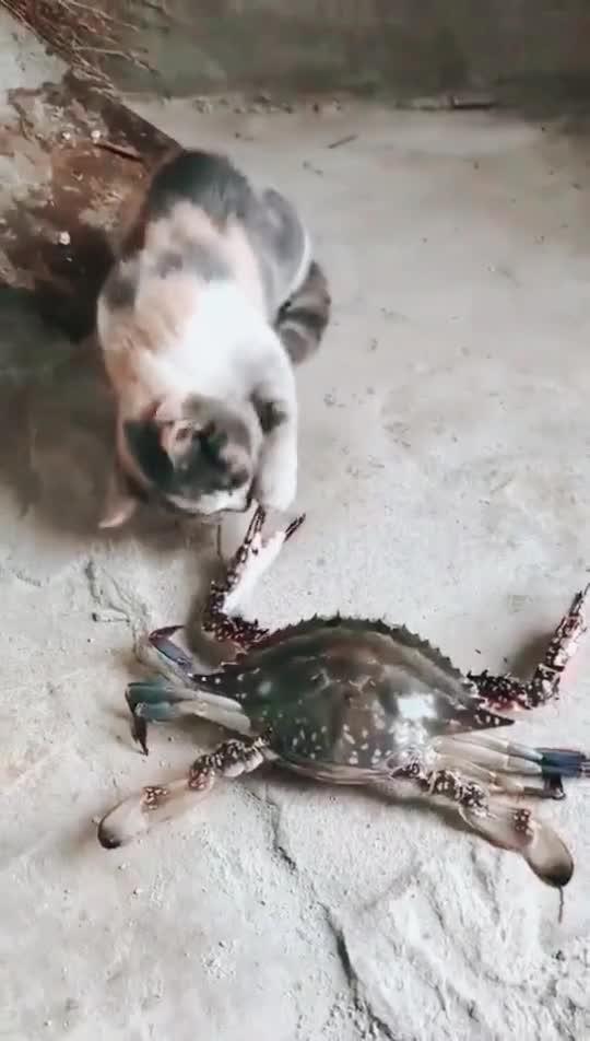 好奇心害死猫啊!