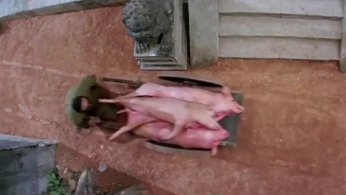 这么大一条猪肉就这样掉地上了