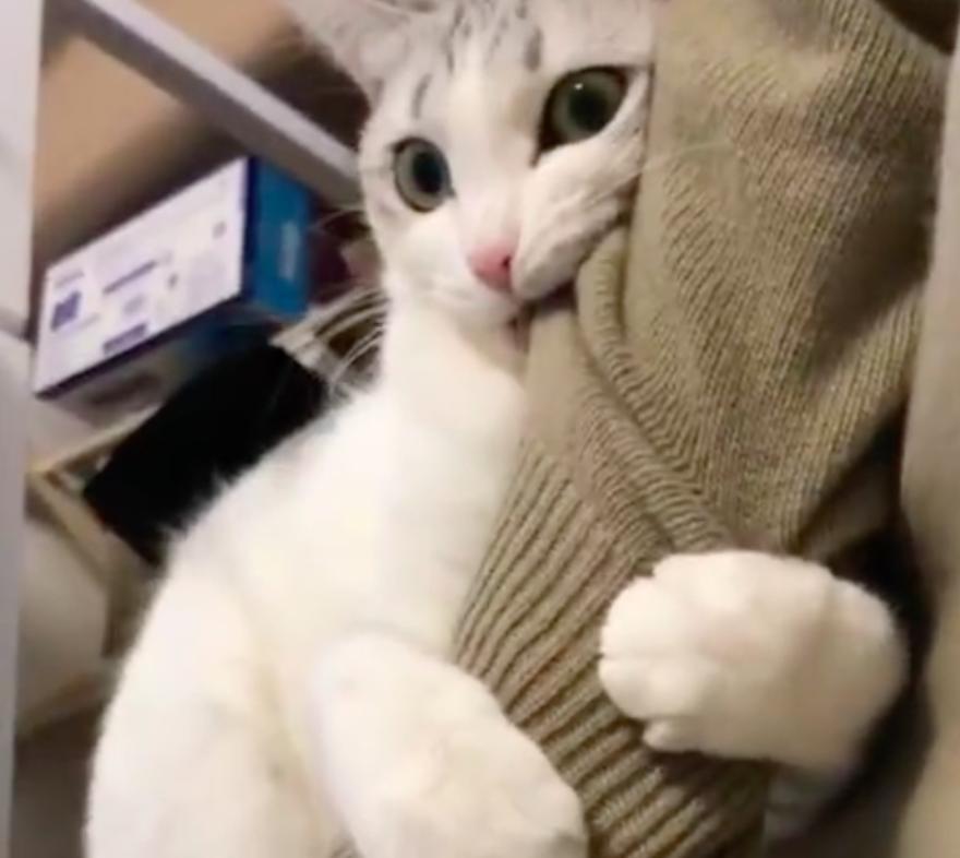 #最爱萌宠#猫咪怕主人离开,紧紧用爪子抱着手臂,太粘人了!