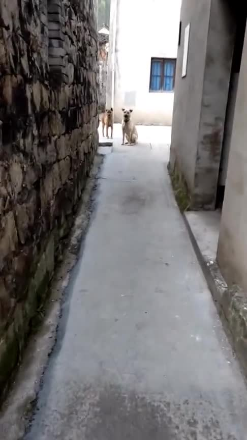 #宠物#路上碰见狗子不要怂,要大胆向前走!