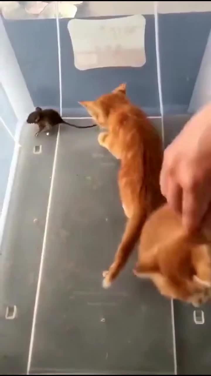 农村户口和城市户口的区别,小猫咪吓懵了