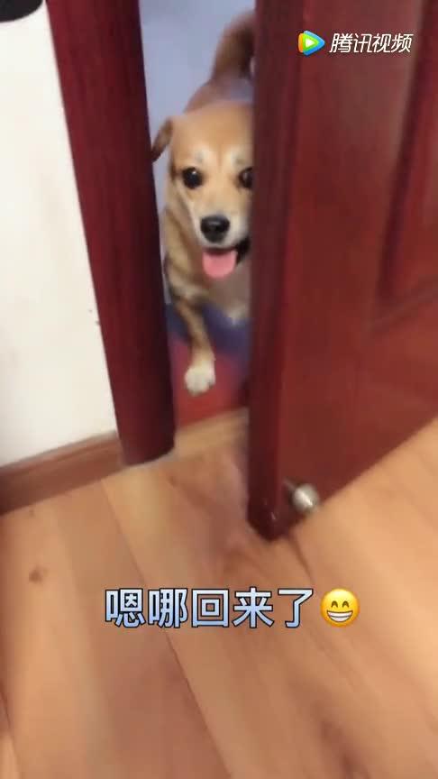 #结果#狗狗偷偷跑出去玩,最后还拐回一只小狗,结果被主人骂它不要脸