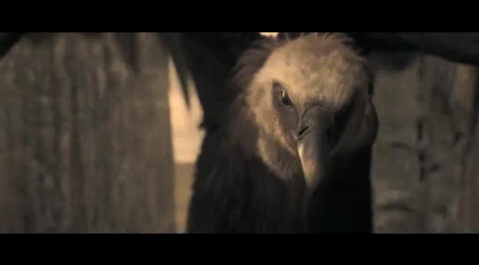 秃鹰要去啄食死人,没想到死人竟然活了