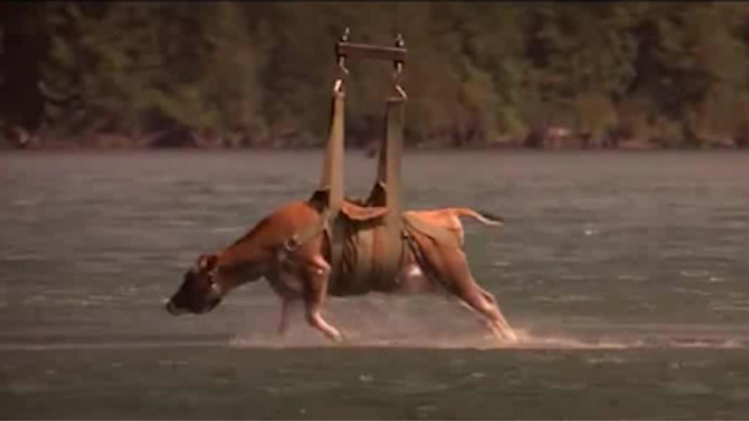 #电影最前线#湖里出现怪物,考察队用一头活牛当诱饵,浮出水面那一刻吓坏众人