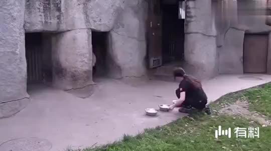 大熊猫惨遭饲养员嫌弃,熊猫:劳资是国宝,你竟敢推我