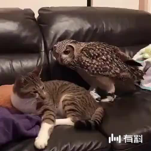 一群小屁孩抓到一只外星猫头鹰,萌萌哒