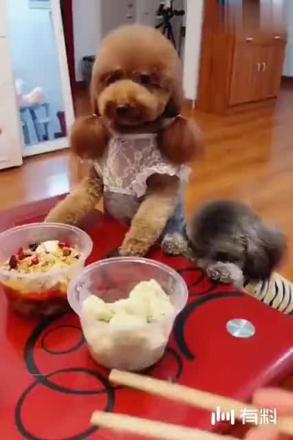 妈妈吃水饺不小心掉桌子上了,接下来妞妞和玛丽的反应好可爱呀