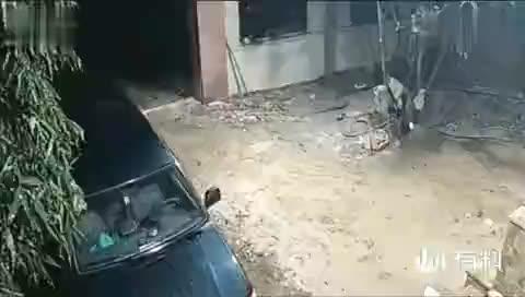 凌晨狗狗发现不对,立马上前查看,下一秒场面太惨了