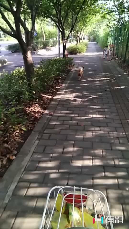 狗狗走6公里了,步伐依然坚定轻松。