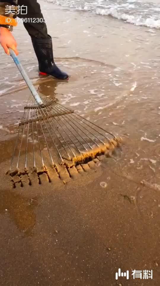 耙子抓海鲜