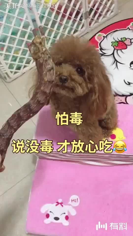美拍视频: 怕毒的狗