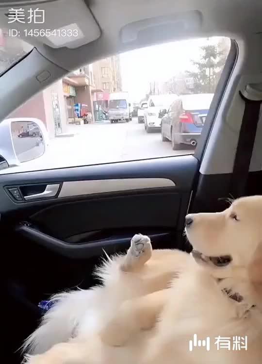 还是别给狗喝这些吧