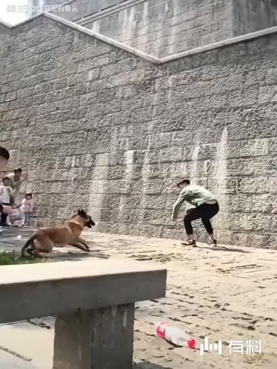 偶遇训犬表演