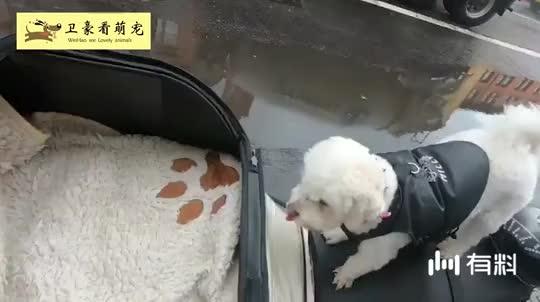 机车男带着狗狗兜风,带上头盔那一刻,太有爱了